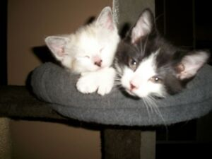 BEAUTIFULL FREE KITTENS TO GIVE AWAY
