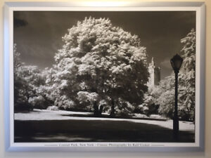 Photo cadre alum IKEA arbre Central Park tree picture and frame