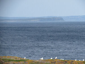 BACON COVE RD, AWESOME OCEAN VIEWS..BACON COVE.. St. John's Newfoundland image 3