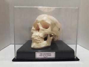 Offspring skull signed