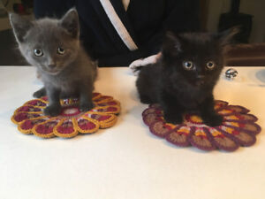 2 Kittens need a loving home !