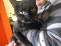 """""""LUNA"""" (very loving)  --  Fixed & Vaccinated  -- @ Small Things"""