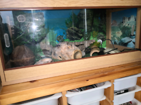 Vivarium with decorations. Houses a Gecko.