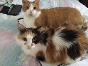 gardienne de chats/visite a domicile - Mtl - Longueuil - rivesud