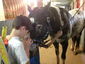 Adoption d'un cheval