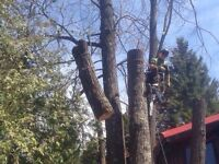 Tree Service - Saugeen Shores