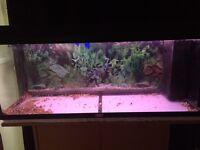 Juwel 180L fish tank with Juwel stand
