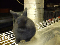 BUNNY,S FOR SALE