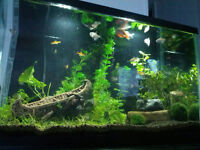 Looking for live aquarium plants!