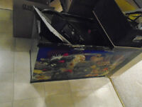 Fish Tank w/ Accessories & Chemicals (in Lower Mission Kelowna)