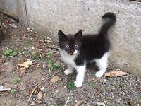 Kitten 8 weeks old - £30