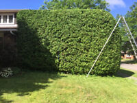 Landscaping and Hedge Trimming Services