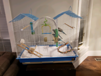 Three Budgies For A New Home