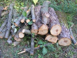 APPLE WOOD for BBQ or Firewood ! Kawartha Lakes Peterborough Area image 1