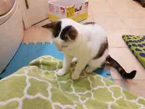 Loving FIV Cat Needs a Home