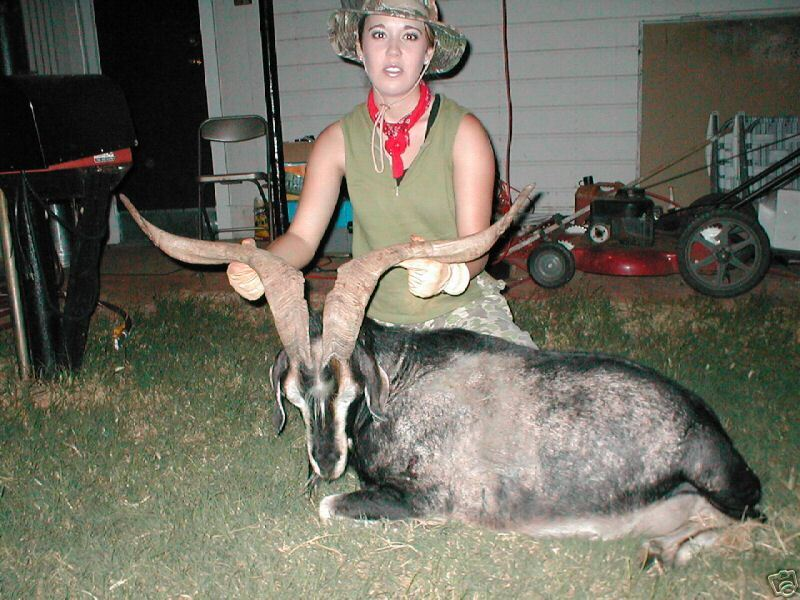 Catalina Goat Hunt w/ Free Lodging Unforgetable Experience in Mason, Texas