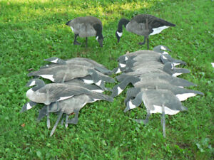Appelant , decoy , silhouette d'outarde Real Geese