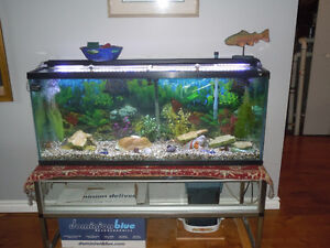 Fish tank 50 gallon