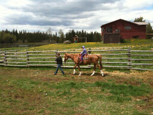 Escape to the Country on these 160 acres! Nimpo Creek, BC