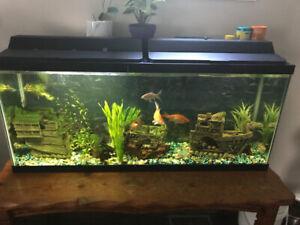 Fish tank 50 gallon for sale