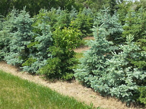 Evergreens - Deciduous Trees and Shrubs