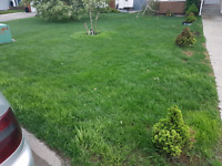 If you want to remove weeds from your yard, just call me.