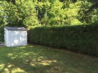 Professional hedge trimming and pruning