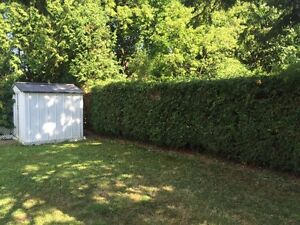 Professional hedge trimming and pruning Kingston Kingston Area image 1