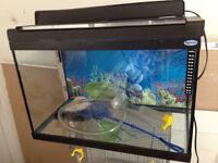 Aquarium 25 galon