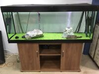 5ft fish tank & (or) fish