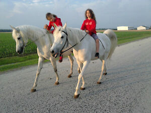 Horse riding club, Saddle up Looking for a few good men or women Sarnia Sarnia Area image 6