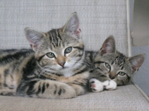 Beautiful Sisters Looking For Caring Home