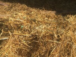 Sq straw bales for sale