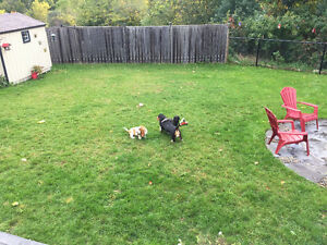 Animal Daycare in Cambridge