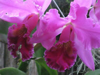Free orchids with Purchase