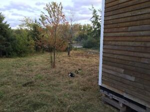 Partially Built Cabin on Freehold Oceanfront Property! St. John's Newfoundland image 4