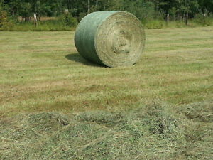 2016 and 2015 Horse/Cow Hay for Sale, Large Rounds