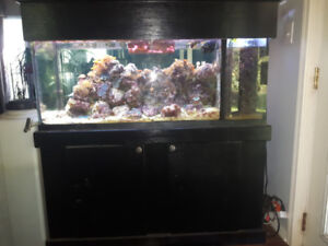 75 Gallon Saltwater Aquarium With Sump, Stand, & More