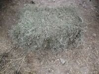 Second Cut Hay - Small Square Bales