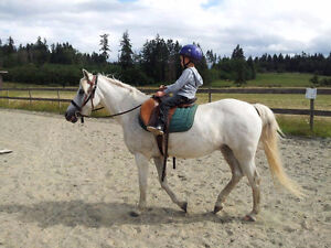 Beginner Basic Riding Lessons up to age 12
