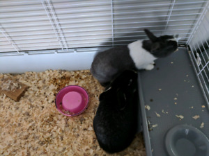 2 female rabbits with cage and stand