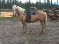 Beautiful Palomino mare for sale