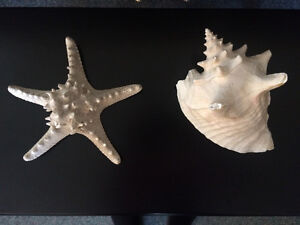 Conch Shell and Starfish Shell