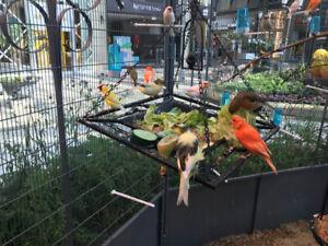 Élevages en volières d oiseaux exotiques rares pinsons Canaries