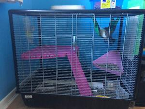 2 rats + grande cage et accessoires