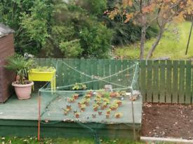 Gardener Wanted?