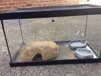 Lizard / Gecko terrarium glass