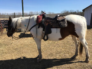 Two great companion horses looking for a loving home.