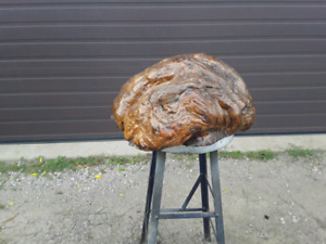 Large Finished Burl, From Tree
