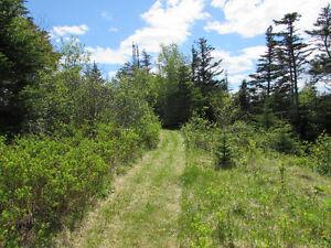 NEW LISTING..12 ACRE RIVERFRONT ESTATE…181 SALMONIER LINE. St. John's Newfoundland image 10